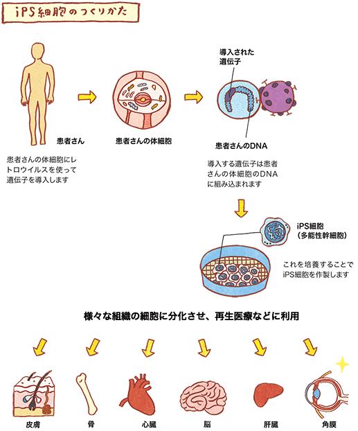 iPS細胞の作り方画像