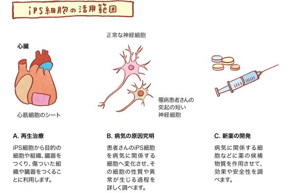 iPS細胞の活用範囲の画像